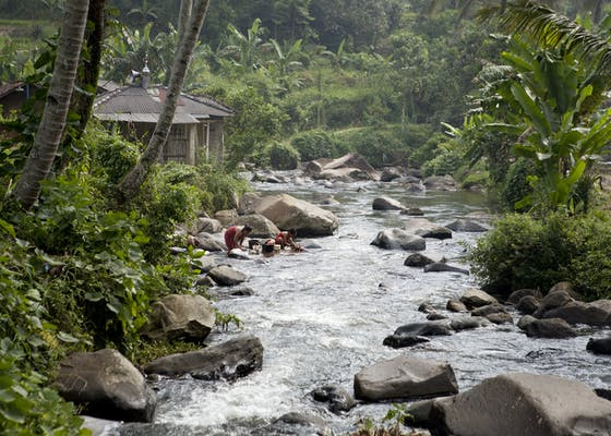 Clean water from Gunung National Park flows down to the nearby village of Bodogol.