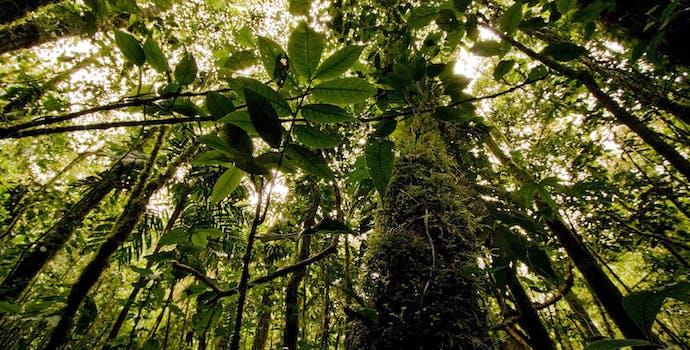 Cloud forest of the El Dorado Reserve in the Sierra Nevada de Santa Marta, Colombia