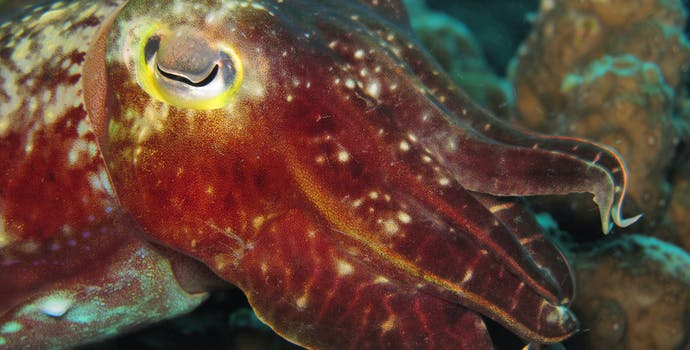 Cuttlefish change colors to blend with their background, and also squirt ink to blind predators while they escape