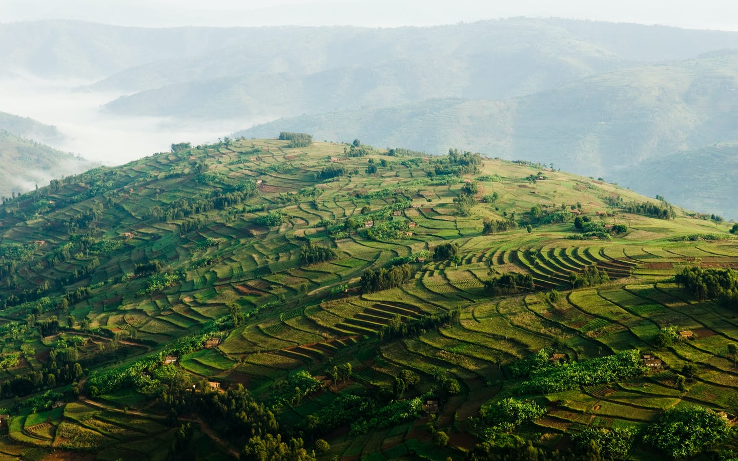Aerial view of agricultural fields on a mountain.