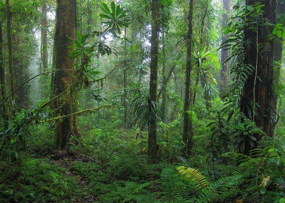 YUS Conservation Area in Papua New Guinea