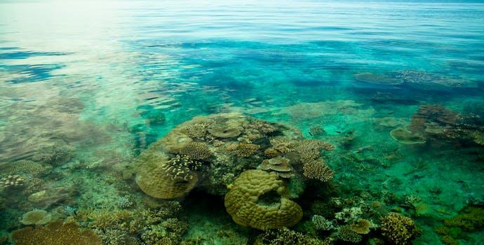 Coral reef in Viti Levu, Fiji