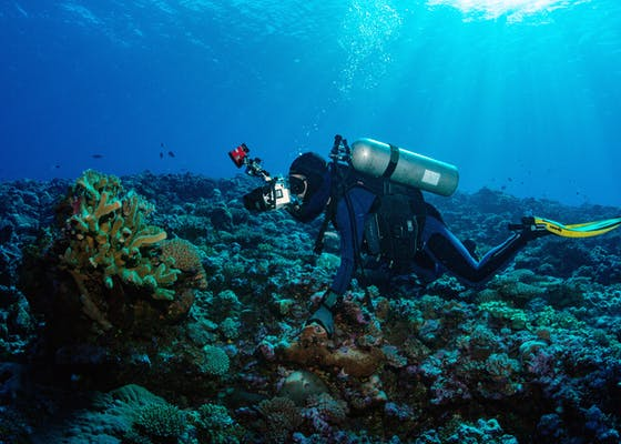 Gerry Allen photographing a secretive hawkfish hidden in a coral head during a marine Rapid Assessment Program.