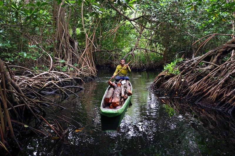 Man navigates a canoe through mangroves in Cisbata Bay, Colombia