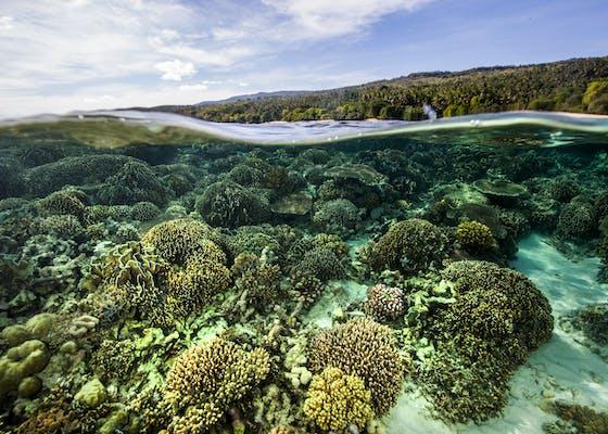 Nino Konis Santana National Park in Timor Leste