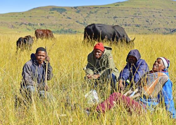 牧民等待他们在Mafube的牲畜拍卖中提供牛,东开普省的第一个这样的拍卖会。