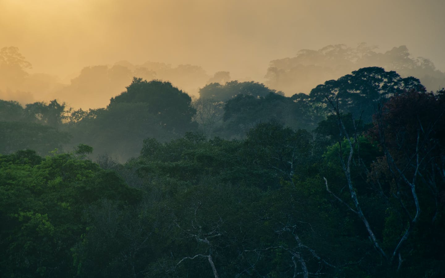 Sunrise from a canopy tower overlooking the Amazon Forest