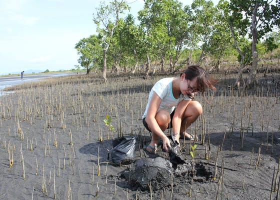 Lynn Tang plants a mangrove seedling in Silonay, Philippines.