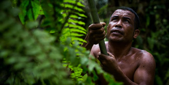 Azman harvests oil palm fruit near Pasoh Forest Reserve