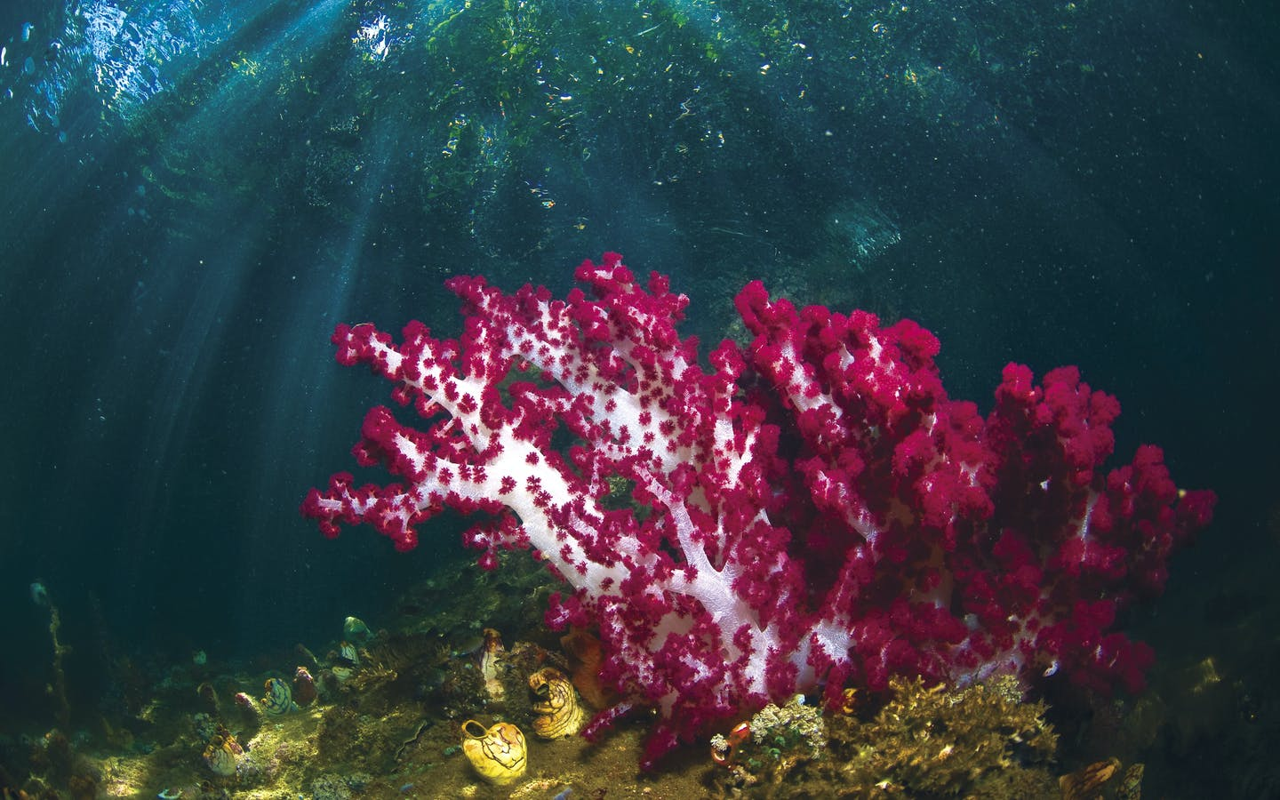 Soft coral grows close to the coastal mangroves, which provide protection from storm surge, habitat for juvenile fish and food for communities.