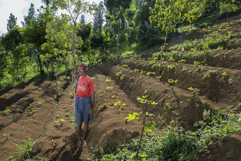 Kardi, a farmer in Indonesia