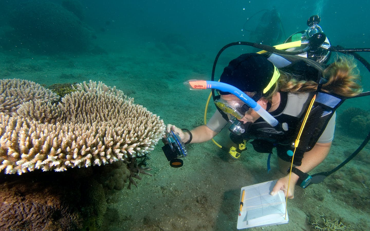 Sheila McKenna photographs coral species in Baie D'Ambodi Vahibe, Antsiranana, Notheast Madagascar, Africa, a site on the CI Marine RAP.