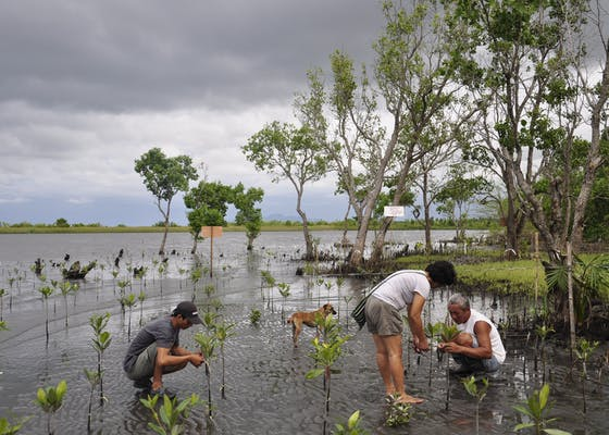 The Silonay community is working together to plant a mangrove forest that will protect the ecology and their future.