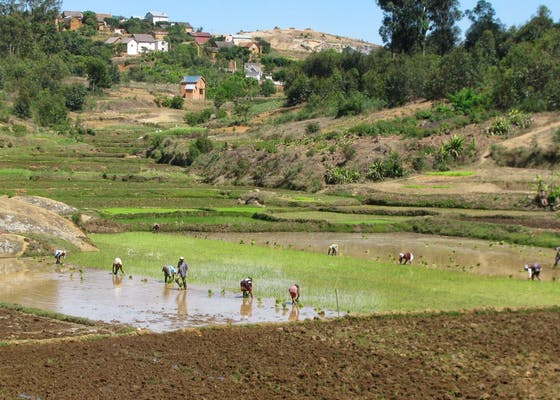 People working in a rice paddy on the road from Antananarivo to Andasibe in Madagascar
