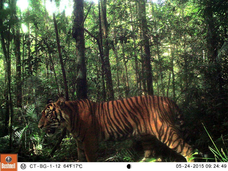 CI and Dove Team Up to Conserve Sumatra's Forests