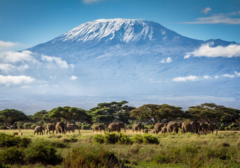 Mt. Kilimanjaro from Kenya with elephants in the foreground.