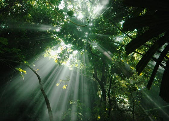 Beams of sunlight pierce the jungle canopy.