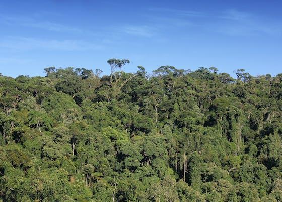 Mid-altitude humid rainforest in Tolongoina, Fandriana Vondrozo corridor, Madagascar