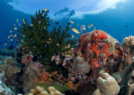 Colorful Reeftop and Snorkelers