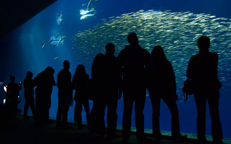 Visitors admire a school of fish at the Monterey Bay Aquarium