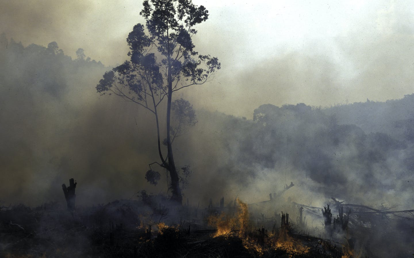 Slash and burning forest for farmland in Madagascar.
