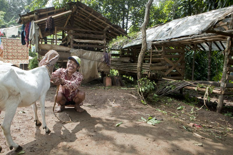 Goat farming near Gunung Gede Pangrango National Park