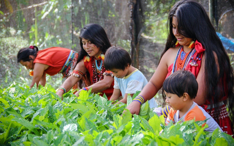 Women of the Awajun Native Community of Shampuyacu (Peru)