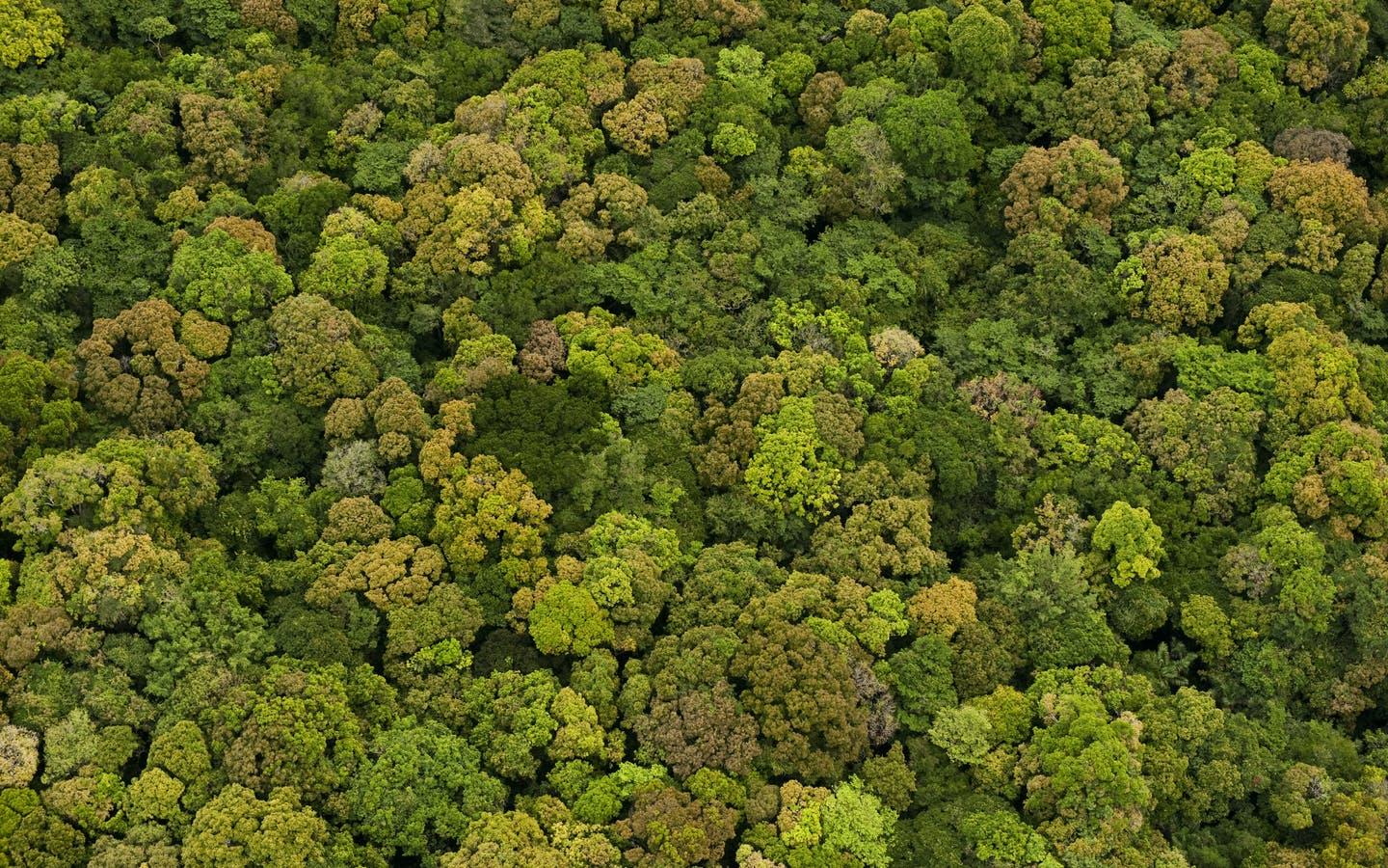 Aerial View of Rainforest, Iwokrama Reserve