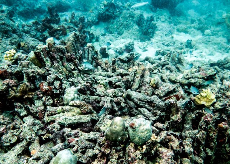 Coral bleaching observed in Natuna Islands during the marine survey.