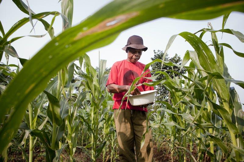 Local farmer plants crops near the Gunung.