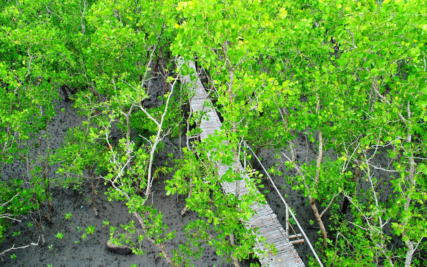 Bamboo boardwalk of the Silonay Mangrove Eco-park