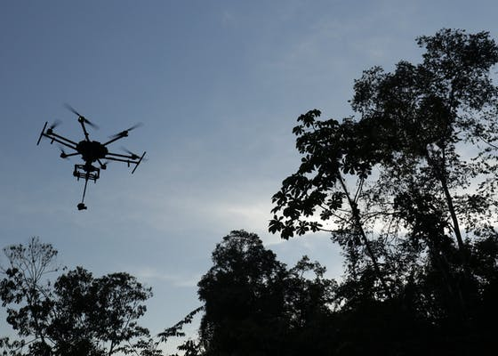 Drone with 360 camera flying over Ecuador's Yasuní National Park forest canopy.