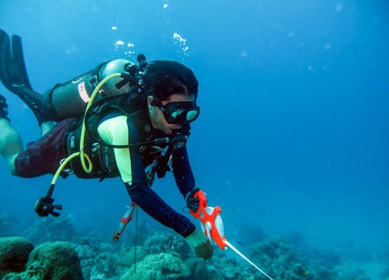 Diver conducting underwater research, Natuna, Indonesia.
