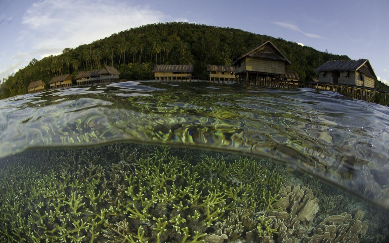 Ocean over-under shot in Raja Ampat, Indonesia