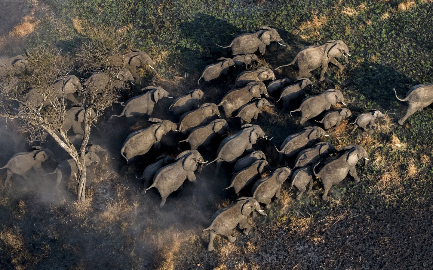 A herd of elephants near the Mara North Conservancy in Kenya.