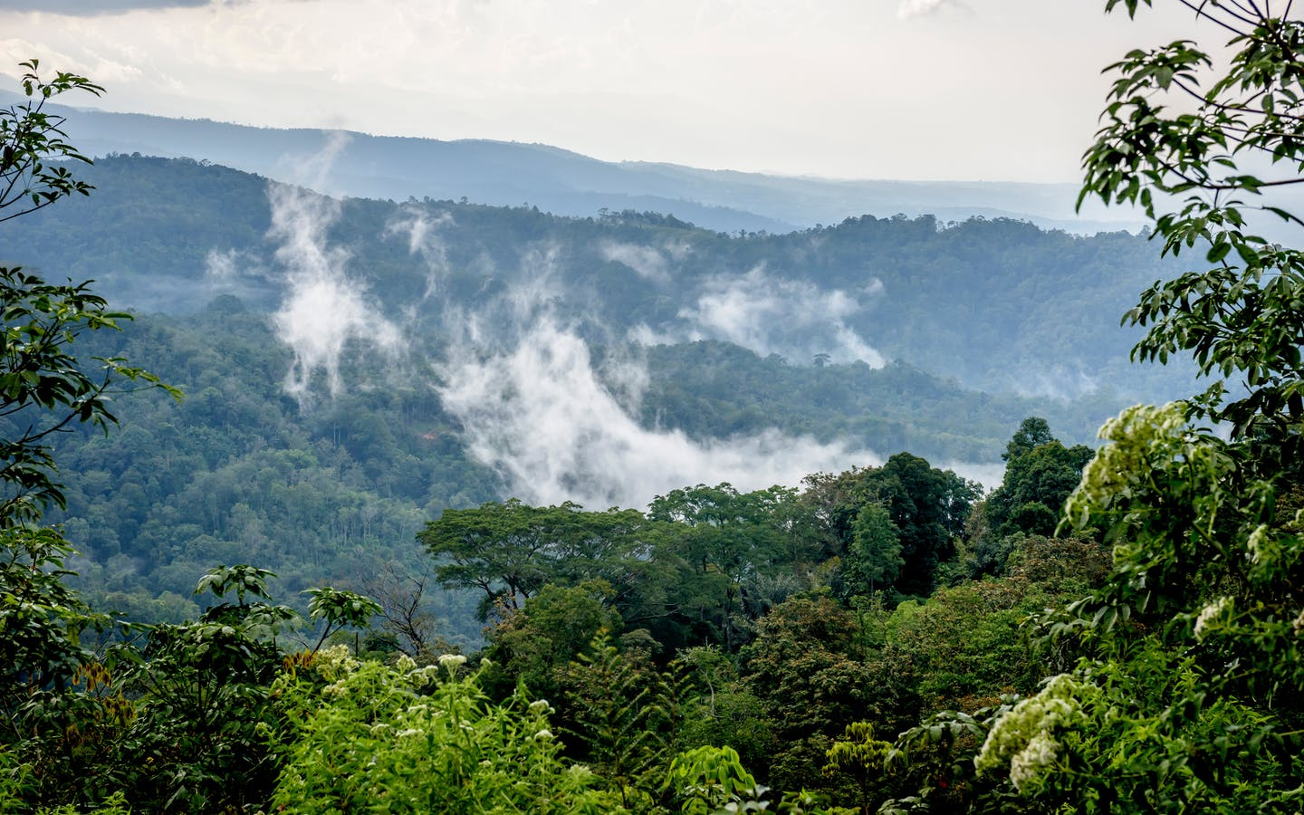 The mists lift after a rainstorm near Batang Gadis National Park in Mandailing Natal, North Sumatra.