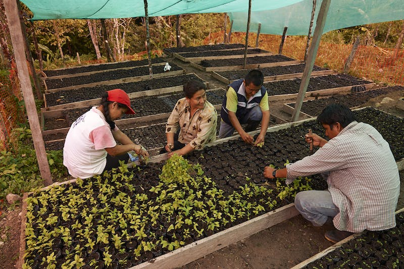 People working in a tree nursery in the Alto Mayo Protected Forest