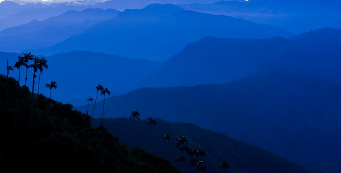 Palm tree silhouettes and snow capped mountains of the Sierra Nevada de Santa Marta, Colombia, South America.