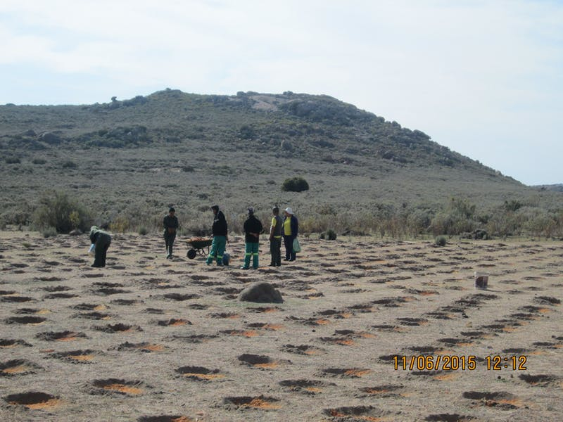 The restoration team digs micro catchments near Leliefontein, South Africa.