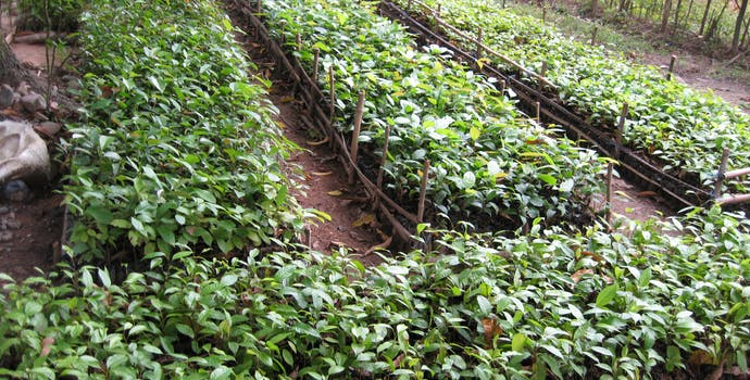 A tree nursery housing seedlings that will be planting on the reforestation plot of the Quirino Forest Carbon project