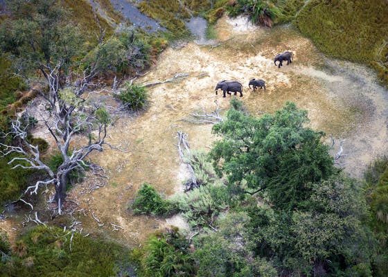Elephants walk through a clearing in the Vumbura Plains, Okavango Delta, Botswana.