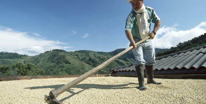 Mr. Isdail's farm, Vereda el Embal, municipio de El Aguila, Colombia, Neotropics