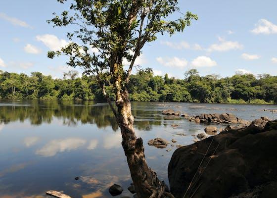 River in the Brazilian Amazon