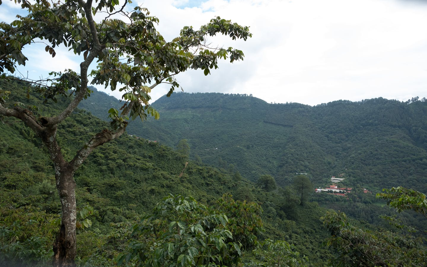 "Monitoring visits of the Starbucks ""One Tree for Every Bag"" program in the Huehuetenango region of Guatemala."