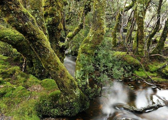 Temperate rainforest in Tasmania, Australia
