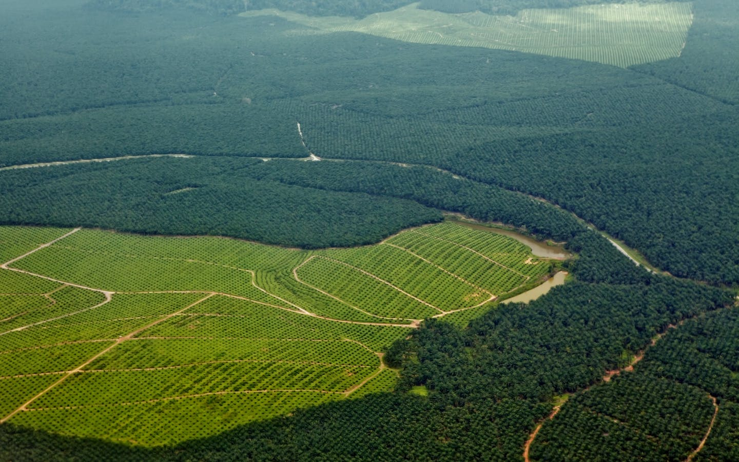 Oil palm plantations in northeastern Borneo, state of Sabah, Malaysia.