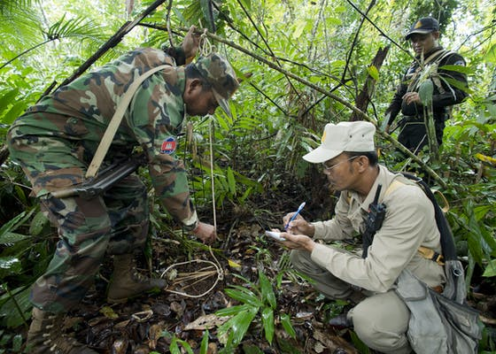Patrol teams conduct checks on snares and report them using the Spatial Monitoring and Reporting Tool (SMART).