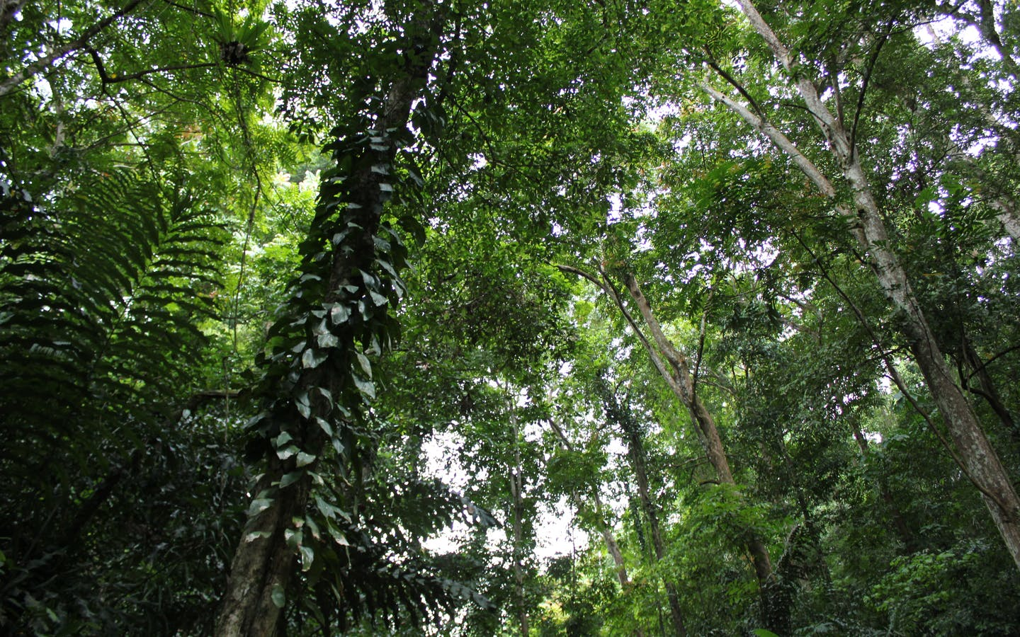 Primary forest cover in the Mount Mantalingahan Protected Landscape, Panalingaan, Palawan.