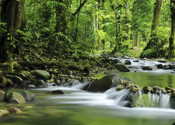 Tropical rainforest and river at Selangor State