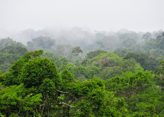 Yasuní National Park in Ecuador